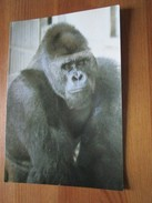 Itineraires Gabonais. Gorille - Singes