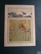 ART NOUVEAU, PROJETS DE REVÊTEMENTS EN FAIENCE Par E.A. SÉGUY. - Prints & Engravings