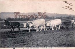 (58) En Nivernais - Le Labourage -  Boeuf âne - 2 SCANS - Sonstige Gemeinden