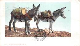A Temperance Outfit Colorado - Donkey âne - 2 SCANS - Denver