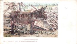 A Colorado Nightingale - Donkey âne - 2 SCANS - Denver