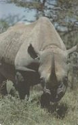 LIBERIA - Rhinoceros, Liberia Phone 200 Units, Tirage 20000, Used