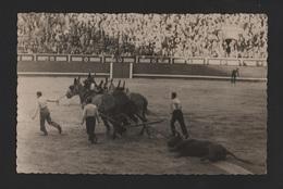 .POSTCARD  1950 Years SPAIN ESPAÑA ESPAGNE ARENA BULLFIGHT TOURADA TORADA TAUREAUX BULLS ARRASTO 1950s - Toros