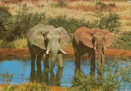 Wildlife Of East Afrika Elephants - Südafrika