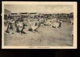B3443 DJIBOUTI - MARCHÉ AUX CHAMEAUX - Gibuti