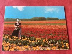 Nederland Keukenhof Lisse - Bloemen