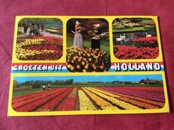 Nederland / Pays-Bas Keukenhof - Fleurs