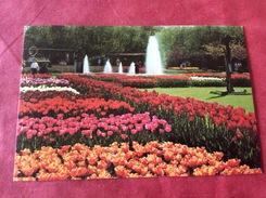 Nederland / Pays-Bas Holland Keukenhof Lisse - Flowers
