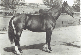NORMAND - Cavalli