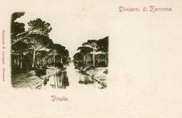 [DC9909] CPA - RAVENNA - PINETA DINTORNI DI RAVENNA - Non Viaggiata - Old Postcard - Ravenna