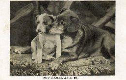 [DC9963] CPA - SONO MAMMA ANCH´IO SOCIETA´ REALE PER LA PROTEZIONE DEGLI ANIMALI TORINO - Non Viaggiata - Ol - Cani