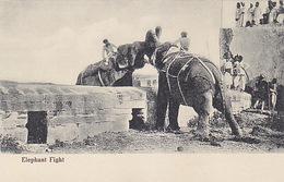 Elephant-Fight   (170305) - Éléphants