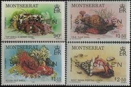 MONTSERRAT 1984 Marine Life SPECIMEN SET:4 [spécimen,Muster,muestra,saggio] - Montserrat