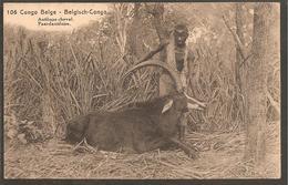 Congo Belge..Entier Postal.Postal Card 15 Cts.Antilope Cheval.LUSAMBO>BUKAMA>CAPETOWN>KIEL ANVERS 1924 - Congo Belge - Autres