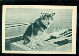 Chien - Hond - Chiens