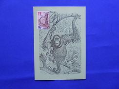 Maximumcard, Monkey, Orang-oetan - Apen