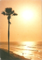 GM - The Gambia - Fajara Beach - Ed. Vistacolor / Photo Peter Brown N° 427 (circ. 19892) - [Bakau] - Gambie