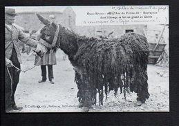 """Animal / Ane,mulet,Mule / Deux Sèvres Ane Du Poitou Dit """" Bourayoux """" / Reproduction Photo ( Fond Neudin ) - Ezels"""