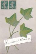 26183 Souvenir De Domremy Pucelle -lierre -jeanne D'arc -Ed Ripr Vieta PGF 703 - Domremy La Pucelle