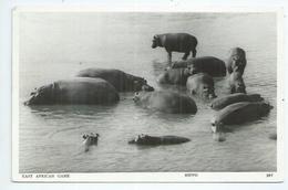 Kenya Uganda Tanganyka Les Hippopotames,hippopotamus,hipopotamo - Kenia