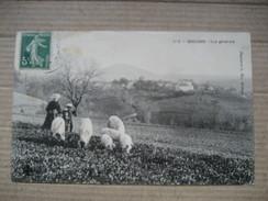 PUY DE DOME  63       BROUSSE    -  GARDIENNE DE  COCHONS            ANIME    TTB - Autres Communes