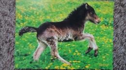 CPM CHEVAL CHEVAUX HORSE POULAIN GAMBADANT - Chevaux