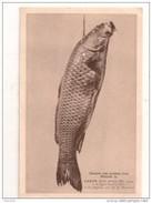 ENCORE UNE VICTIME D´ UN NASAKI,,,CARPE De 17 LIVRES PRISE A ST AIGNAN Par Mr MANDARD,,,,rare - Pesca