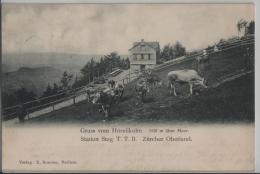 Gruss Vom Hörnli (1135 M) Zürcher Oberland (ab Station Steg T.T.B.) Animee Kühe Vaches - Photo: E. Brunner - ZH Zurich