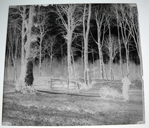 1907 Forêt De Crecy En Ponthieu ? Près Abbeville - 2 Négatifs Sur Plaques De Verre 6X6cm Env - Bien Lire Descriptif - Glass Slides