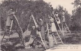 CUEILLETTE DES OLIVES EN PROVENCE (dil36) - Árboles