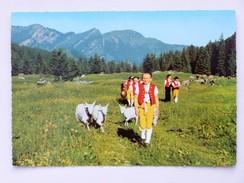 SUISSE / SCHWEIZ / SWITZERLAND // CPA - AK 1969, Alpage / Alpaufzug (Kühe, Geissen, Trachten, Hirten) - Agriculture