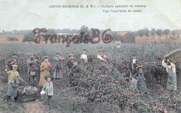 (77) Grisy Suisnes - Culture Spéciale De Rosiers - Une Cueillette De Roses - CPA Colorisée  - 2 SCANS - Autres Communes