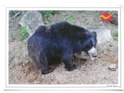 Sloth Bear  / Bannerghatta National Park Bangalore / India - Ours