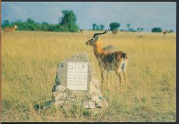 °°° 1687 - UGANDA - KOB AT THE MATING GROUND - 1998 °°° - Uganda