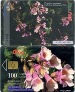 Telefonkarte Bulgarien - BulFon - Blumen , Flowers - 100 Units - Aufl. 120000 - 01/99 - Bulgarien