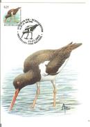 MC BUZIN  Bird / Huitrier Pie / Scholekster  / Haematopus Ostralegus / Oystercatcher / Austernfischer  2002 - Vögel