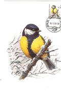 MC BUZIN  Bird / Mésange Charbonnière / Koolmees  / Parus Major / Great Tit / Kohlmeise  2000 - Sperlingsvögel & Singvögel
