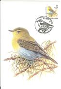 MC BUZIN  Bird / Pouillot Siffleur / Fluiter/ Phylloscopus Sibilatrix / Wood Warbler / Waldlaubsänger  2000 - Sperlingsvögel & Singvögel
