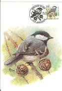 MC BUZIN  Bird / Mésange Noir / Zwarte Mees / Parus Ater  / Coal Tit / Tannenmeise  1999 - Sperlingsvögel & Singvögel