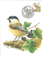 MC BUZIN  Bird / Mésange Boréale / Matkop / Parus Montanus / Willow Tit / Weidenmeise  1997 - Sperlingsvögel & Singvögel