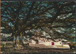°°° 1726 - GUATEMALA - PLAZA , CEIBA E IGLESIA PALIN - 1986 With Stamps °°° - Guatemala