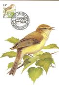 MC BUZIN  Bird / Pouillot Fitis / Fitis / Phylloscopus Trochilus / Willow Warbler / Fitis   1995 - Sperlingsvögel & Singvögel