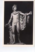 U206 Cartolina Roma, Museo Vaticano, L'Apollo Di Belvedere (Copia Da Opera Alessandrina) SCULTURA SCULPTURE - Museums