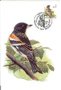 MC BUZIN / Pinson Du Nord / Keep / Fringilla Montifringilla / Brambling / Bergfink   2000 - Sperlingsvögel & Singvögel