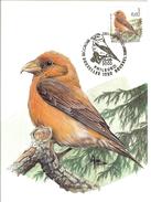 MC BUZIN / Becroisé Des Sapins / Kruisbek / Laxia Curviostra / Crossbill / Fichtenkreuzschnabel   2000 - Sperlingsvögel & Singvögel