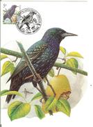 MC BUZIN / Etourneau Sansonnet / Spreeuw / Sturnus Vulgaris / Starling / Star   1996 - Songbirds & Tree Dwellers