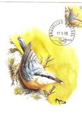MC BUZIN / Sitelle Torchepot / Boomklever / Sitta Europea / Nuthatch / Kleiber  1988 - Sperlingsvögel & Singvögel