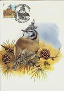 MC BUZIN / Mésange Huppée / Kuifmees  / Parus Cristatus / Crested Tit  / Haubenmeise   1998 - Songbirds & Tree Dwellers