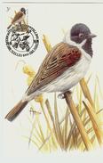 MC BUZIN / Bruant Des Roseaux  / Rietgors  / Emberiza Schoeniclus  / Reed Bunting  / Rohrammer   1991 - Songbirds & Tree Dwellers