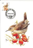 MC BUZIN / Troglodyte Mignon  / Winterkoning / Troglodytes Troglodytes  / Wren / Zaunkönig  1992 - Sperlingsvögel & Singvögel